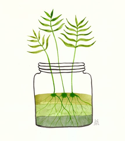 jar of ferns sprout
