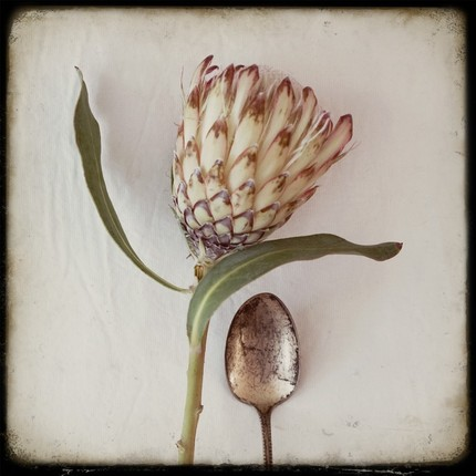 protea with spoon